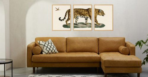 David Attenborough would thoroughly approve of these 11 animal art prints
