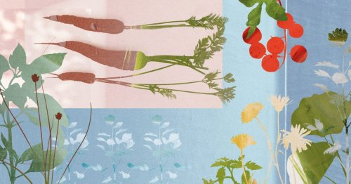 How to grow your own veg without a garden