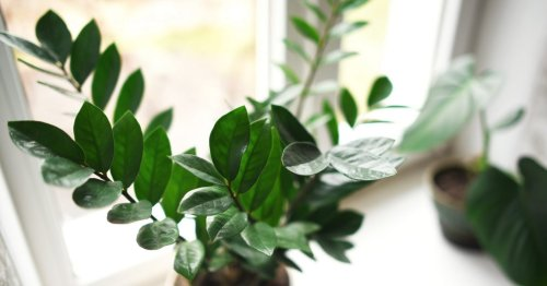 Houseplants stopped growing? Here's how to work out why (and what you can do about it)