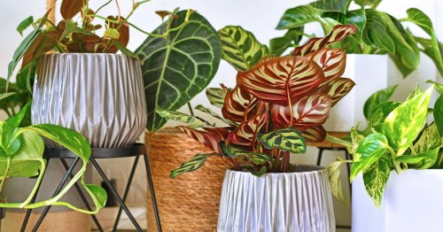 How to stop those annoying little flies from taking over your houseplants