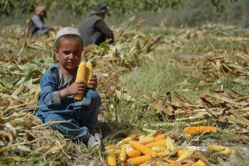 Afghanistan : plus de la moitié de la population en situation d'insécurité alimentaire aiguë cet hiver