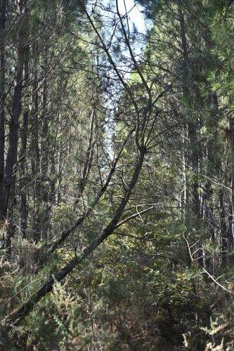 Pindères : un espace naturel pour compenser les travaux de Center Parcs