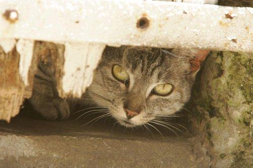 Île de Ré : 490 chats « libres » repérés sur un territoire où la prolifération inquiète