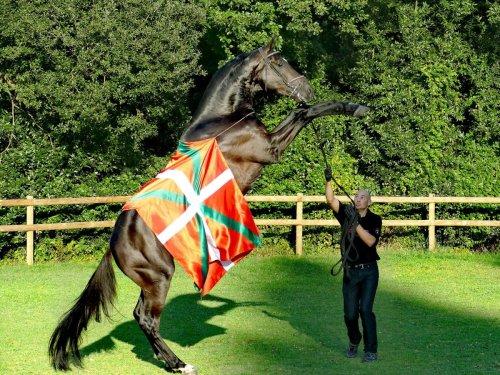 Bidart : le pur-sang « Impérial d'Euskadi » acheté par le roi du Maroc