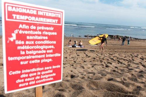 Pays basque : le diagnostic des microalgues toxiques révèle une espèce inédite en Atlantique et une toxine inconnue