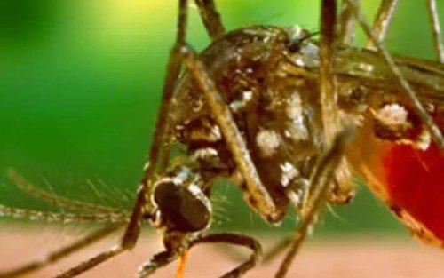 La pandémie de Covid-19 ne doit pas nous faire oublier la dengue