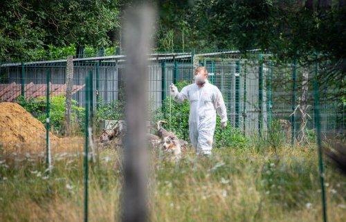 Landes : 210 chiens saisis dans un élevage soupçonné de nombreux manquements