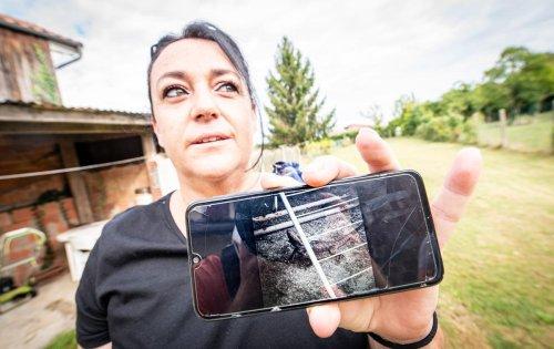 Insolite : une Landaise capture un dragon dans son jardin