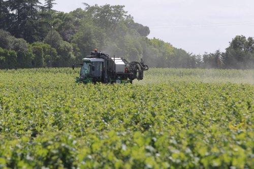 Gironde : des arrêtés anti-pesticides annulés dans trois communes