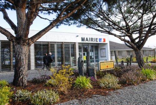 À Saint-Aubin-de-Médoc en Gironde, les arbres se font remarquer
