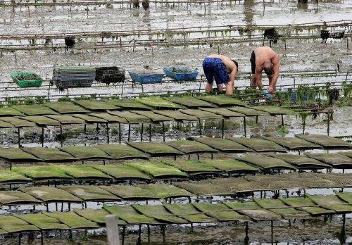 Charente-Maritime : ces projets originaux de la pêche et de la conchyliculture subventionnés par l'Europe