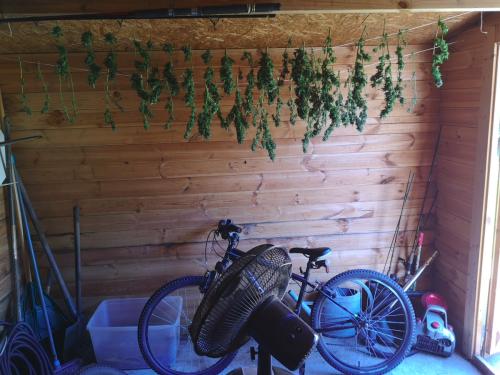 Bassin d'Arcachon : du cannabis séché à domicile