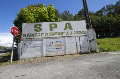 Dordogne : une chienne jetée par-dessus le portail de la SPA