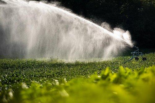 Alimentation : peut-on vraiment se passer de l'agriculture intensive ?