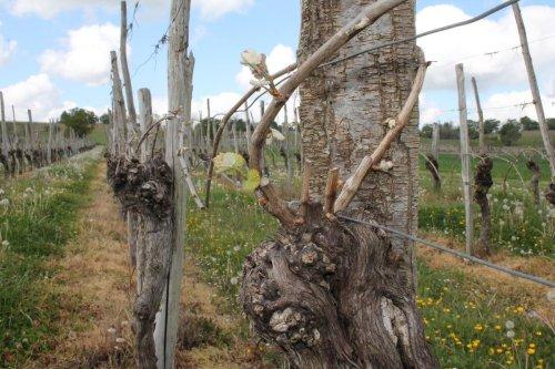 Gel en Gironde : la carte des premiers dégâts