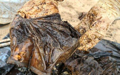Landes : une baleine à bec avec 16 kilos de plastique dans l'estomac