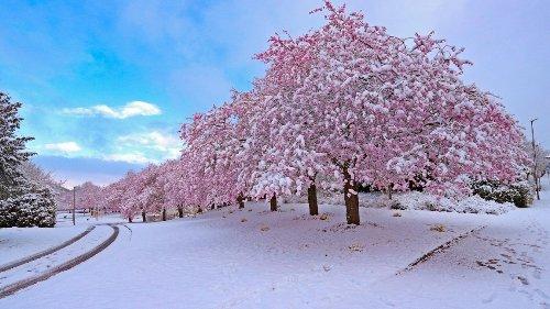 Meteorologie: Ist das Aprilwetter noch normal?
