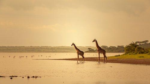 Fernreisen im Herbst 2021:Auf nach Afrika