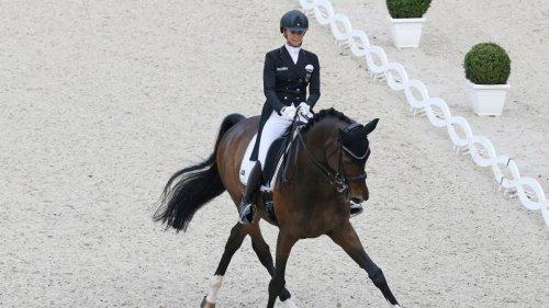 Dressur:Neue Pferde braucht das Team