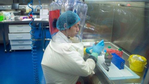 Globale Gesundheit:Wenn Viren aus dem Labor ausbrechen