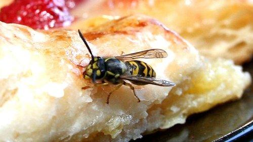 Insekten in München:Rettet die Bienen-Retter!