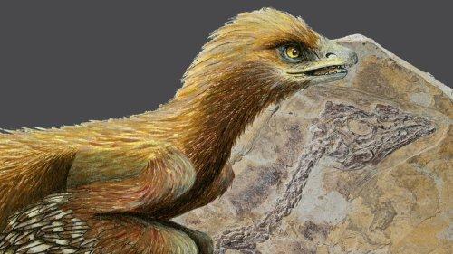 Archaeopteryx: Und er war doch ein Vogel