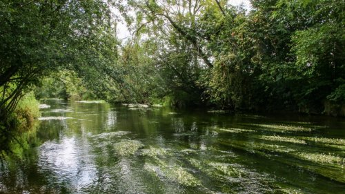 Naturschutz:Eine Heimat für bedrohte Arten