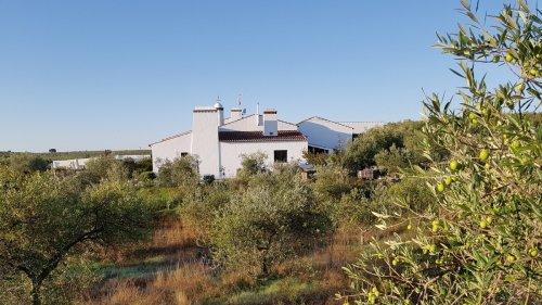 Urlaub in Portugal:Oliven und Operationen