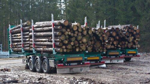 Ebersberger Forst:Bayern: Der Holzpreis stabilisiert sich