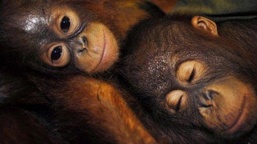 Artenschutz:Für immer verloren