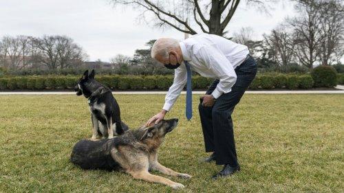 First Dogs:Pfui und aus!