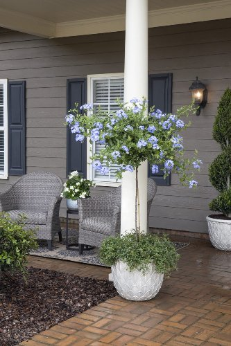 Home Improvement Ideas cover image