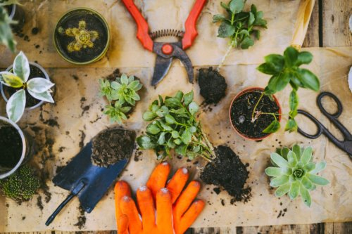 All of the Basic Tools You Should Keep in Your Garden - Sunset Magazine