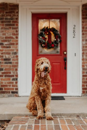 Gifts for Pets: Dogs, Cats, Chickens, and More