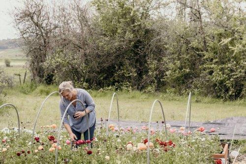 Spring Garden Ideas: Plant a Color Palette of Bulbs - Sunset Magazine