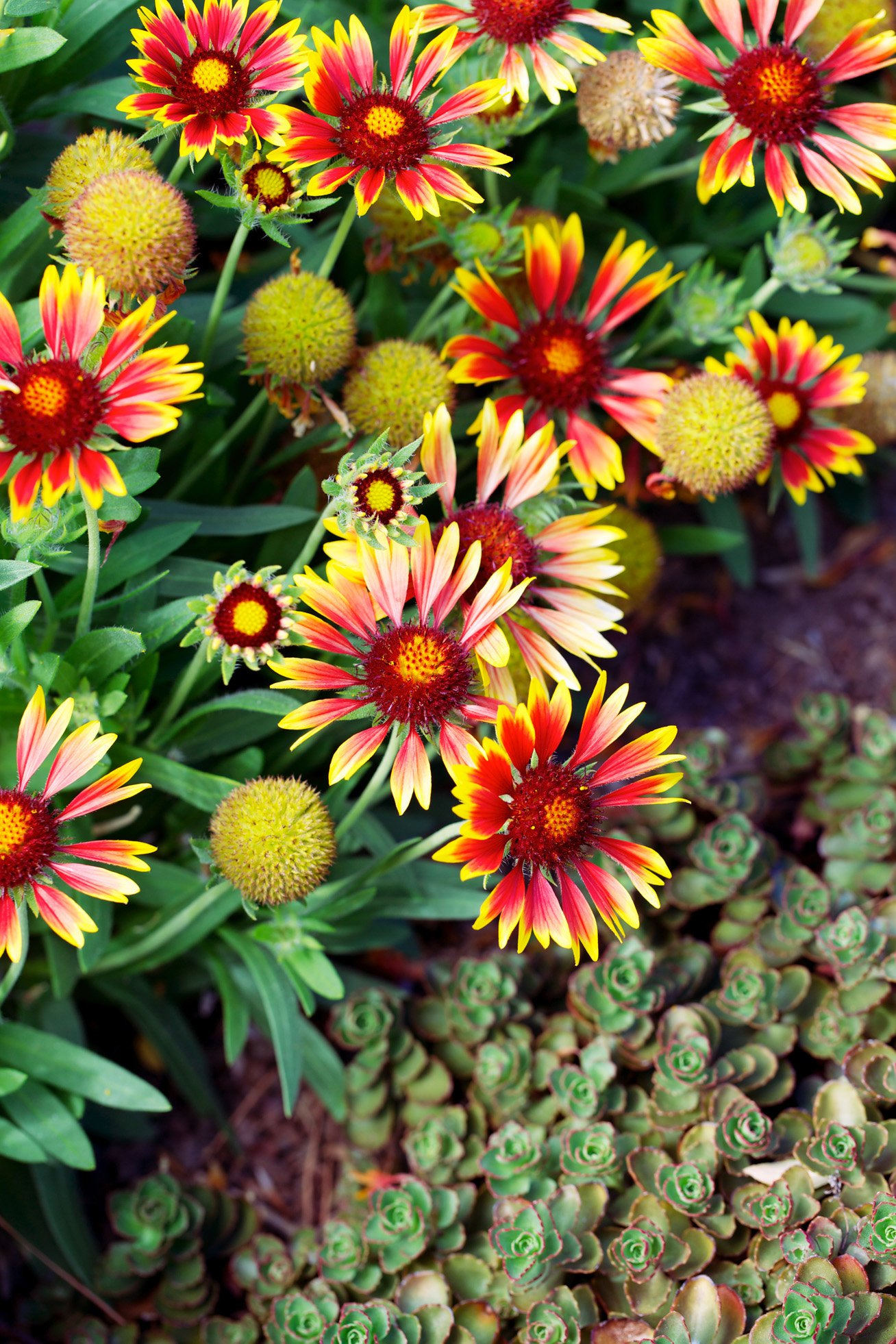 Dozens of Water-Wise Plants That Go Way Beyond Succulents