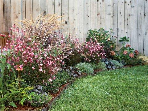 Border Flowers for Spring