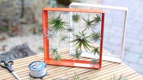 How to design with airplants