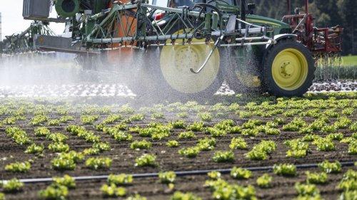 Cresce demanda por alimentos sem pesticidas e água limpa