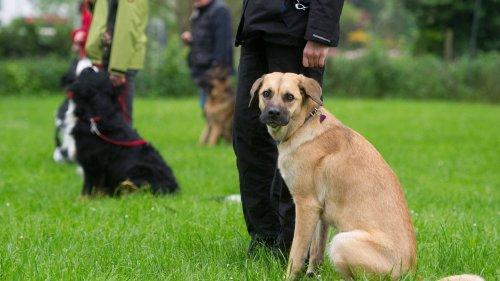 Hundeführerschein wird in Baden-Württemberg zur Pflicht