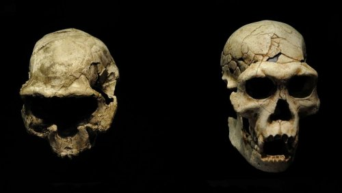 Where did time hide the body? New human ancestor has surfaced without any bones