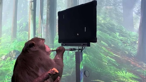 Not only can this Neuralinked monkey play pong, he can do it with just his mind