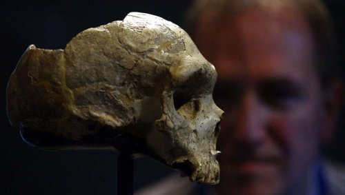 Turns out human DNA isn't really that human after all
