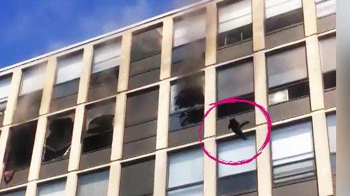 Katze springt aus fünftem Stock und lässt das Netz staunen