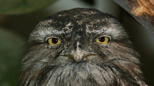 Thüringer Forscher haben frohe Botschaft für schräge Vögel