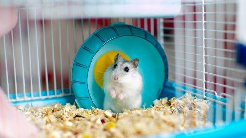 Mr. Goxx: Hamster handelt erfolgreicher mit Kryptowährungen als S&P 500