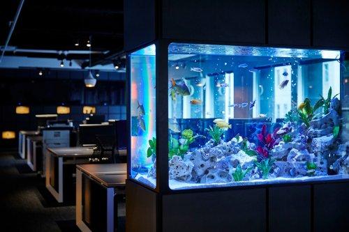 Risikofaktor IoT: Casino durch Aquarium gehackt