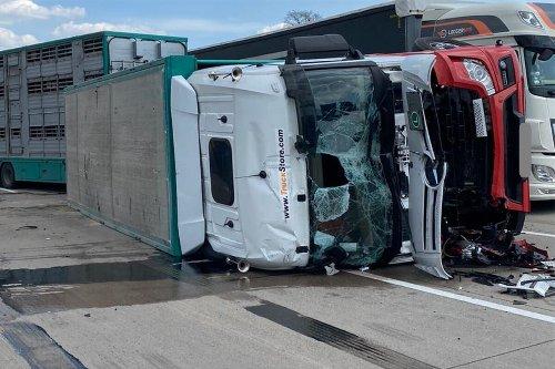 Lkw kippt um, mehrere Schweine tot: A2 Richtung Hannover nach Unfall gesperrt