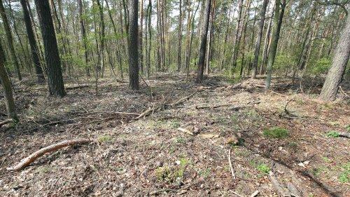 Wäldern droht das nächste Dürrejahr