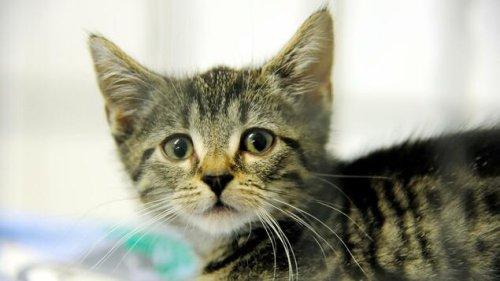 """PETA startet neue Kampagne zu """"Speziesismus"""""""